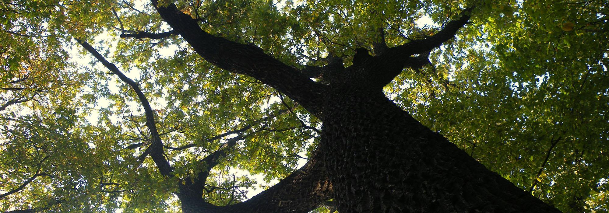 SLIDE7-oak12